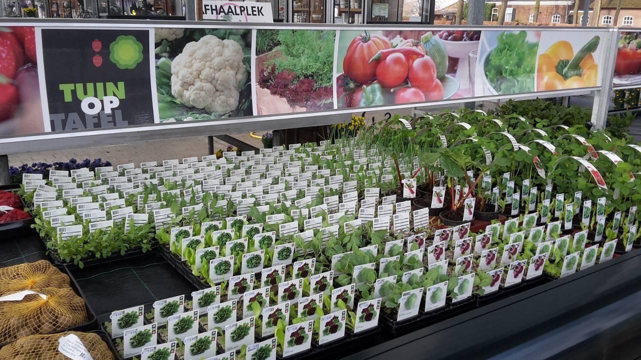 Kwekerij van de ven tuin op tafel verkoop groenteplanten