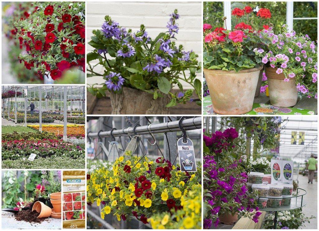 sfeerfoto collage perkplanten