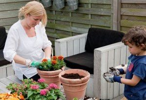 website planten in potten met potgrond